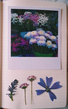 Wonderful Idea :) Pressed flowers from your Travels. Design Poster, Art Design, Art Journal Inspiration, Art Inspo, Collage, Jm Barrie, Tumblr Art, Nature Journal, Journal Art