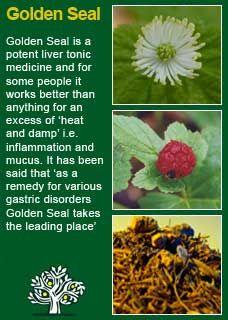 Richard Whelan ~ Medical Herbalist ~ Rosemary