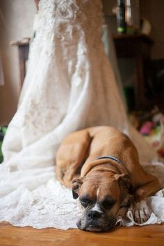 15 Adorable Ways to Include Your Dog in Your Wedding: Carry the train