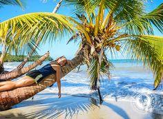 Casey on a palm tree Cahuita National Park