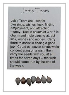 Dried Herb - Job's Tears - Pack of 7 for Spells & Rituals   The Magickal Cat Online Pagan/Wiccan Shop