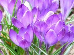 blooming flowers - Google Search