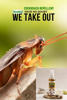 JustOut is a Best Cockroach Repellent Spray. This spray is made up of Natural Oils & Herbal Extracts. It is an effective repellent against cockroaches Cockroach Repellent, Cockroach Control, Roaches, Herbal Oil, Natural Oils, Biodegradable Products, Herbalism, Shop, Places To Visit