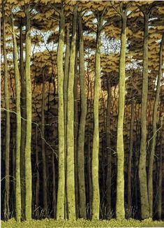 """Beech Trees, Hackfall"" by Simon Palmer (watercolour, ink and gouache) plus more Simon Palmer pictures. Contemporary Landscape, Landscape Art, Landscape Paintings, Beech Tree, Guache, Art Graphique, Modern Landscaping, Tree Art, Art Photography"