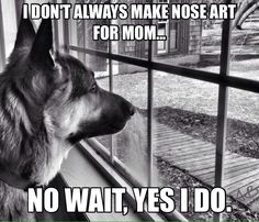 """Every glass surface within their reach has """"art"""" on it. #germanshepherddogs"""