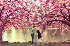 Find out your true tree identity. Are you a wise oak, or playful cherry blossom? Cherry Blossom Wallpaper, Backgrounds Girly, Elegant Engagement Rings, Wallpaper Free Download, Mermaid Art, Summer Of Love, Couple Pictures, Instagram Story, Picture Video