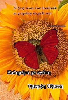 Good Morning, Day, Decor, Inspiring Sayings, Buen Dia, Decoration, Bonjour, Bom Dia, Dekoration