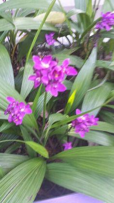 Orquídea - Violeta - Jardim Botânico- Rio de Janeiro  - Foto: Marília Vidigal Carneiro
