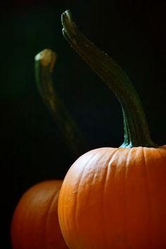 Fall Kitchen Art Orange Autumn Pumpkins Black by LawsonImages