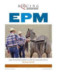 mild epm in horses