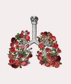 """MizEnScen """"Anatomy and Roses"""""""