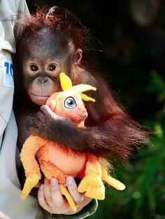 Baby monkey face shading