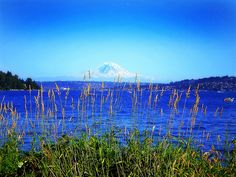 Seward Park -  South of downtown.  Great views of Mt. Rainier on a clear day