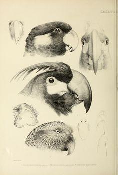 v.2 - The genera of birds : - Biodiversity Heritage Library