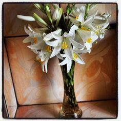 Flowers, Instagram, Florals, Flower, Blossoms