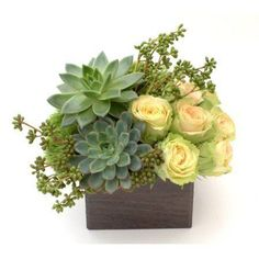 An upscale flower and plant combination including petite green succulents and delicate roses. Mini garden of roses and succulents gracefully set on a compact wooden box. Perfect to send as a gift in to loved ones and business associates in NYC. Succulent Centerpieces, Succulent Arrangements, Floral Centerpieces, Succulents, Succulent Plants, Masculine Centerpieces, Table Centerpieces, Contemporary Flower Arrangements, White Flower Arrangements