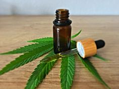 Cannabidiol (CBD) is among the widely discussed topics in the healthcare sector today. CBD comes from the hemp plant that contains more than 100 different compounds. Out of all the compounds, CBD… Cannabis Plant, Cannabis News, Marijuana Plants, Combattre Le Stress, Stress And Anxiety, Atopische Dermatitis, Trouble Anxieux, Good Manufacturing Practice, Health Care
