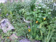 Front roadside driveway bed - Today in the gardens 7-19-2013