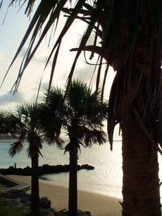 Sullivan's Island,SC  Palm Trees, Jetties, Dolphins, Breech inlet-Beautiful! http://www.sweetgrassvacationrentals.com/