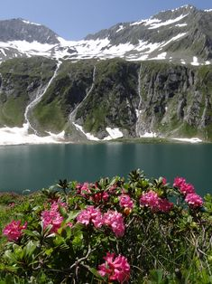 Almrosenblüte beim Seebachsee im Obersulzbachtal. River, Outdoor, National Forest, Hiking, Things To Do, Outdoors, Outdoor Games, The Great Outdoors, Rivers