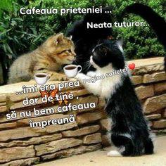 Good Morning, Cats, Good Morning Funny, Buen Dia, Gatos, Bonjour, Cat, Kitty, Good Morning Wishes