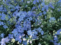 Nature Aesthetic, Flower Aesthetic, Des Fleurs Pour Algernon, My Flower, Beautiful Flowers, Flower Crowns, Fresh Flowers, Wild Flowers, Spring Flowers