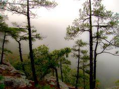 Foggy morning, Big Piney Creek valley Arkansas