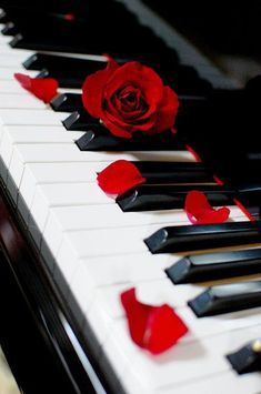 piano love I want to play piano again. when I was a child i used to play piano every day. Piano Music, My Music, Piano Keys, Piano Art, Music Stuff, Sheet Music, Mundo Musical, Instruments, Red Aesthetic