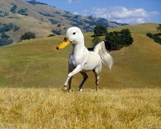 Nature+Animals+Together | photoshop animals together new species 2 Hilarious New Animal Species ...