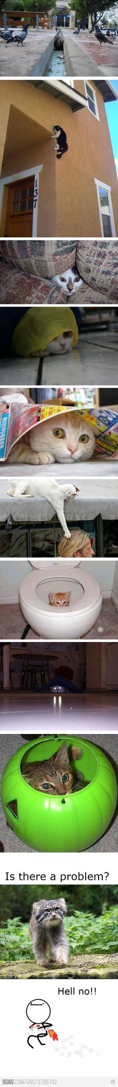 @Katie Byford is this why you don't like cats?