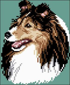 The Shetland Sheepdog originated in the and its ancestors were from Scotland, which worked as herding dogs. These early dogs were fairly I Love Dogs, Cute Dogs, Blue Merle Collie, Dog Dna Test, Shetland Sheepdog Puppies, Dog Mixes, Herding Dogs, Dog Crafts, Modern Cross Stitch Patterns