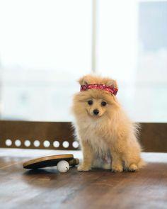 Image result for logan paul dog kong