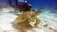 Plongée à Gili à 30 minutes de traversée de Lombok # Indonésie, des fonds clairs, des tortues #sensations inoubliables