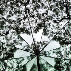 """@gabrielbeas's photo: """"Eco de árboles #df #mexico #mexicocity #photooftheday #eco"""""""