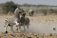 Uk Trip, Wildlife Photography, Safari, National Parks, September, Cute, Travel, Animals, Instagram