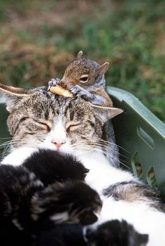 The CatMum and Her  family...Kitties and a Squirrely #cute #cats