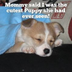 Mommy said I was the cutest Puppy she had ever seen!