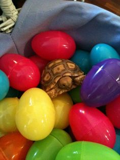 i want that in my easter basket! awww :)