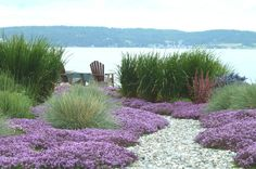 A simple pathway past low growing beachy perennials and taller grasses connects this waterfront garden to the wider landscape