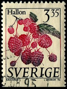 Fruits anyone? - Stamp Community Forum - Page 2