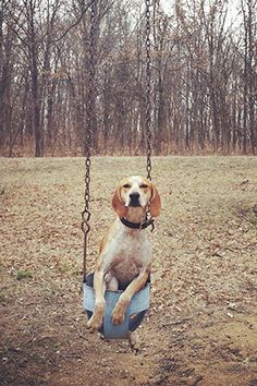 Maddie on a Swing.