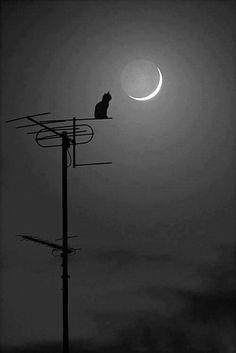 cat photography Black and White cats kitten portrait etsy kittens scottish fold Black Cat black cats Duncan Sun Moon, Stars And Moon, Love Moon, Shoot The Moon, Moon Pictures, Moon Magic, Beautiful Moon, Moon Art, Belle Photo