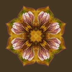Art - Crocus  by Lynde Young