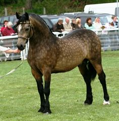 A most unusually marked horse