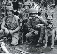 Marine Raiders and some of their dogs on Bougainville. After a year of organization and training, the 1st Marine War Dog Platoon entered action on the island on November 1st, 1943. While the Army had put war dogs to good use already, mainly for sentry and guard duties, this was the first organized deployment of canine warriors by the Marine Corps, and the Marines intended to bring the dogs into the field, sniffing out enemy positions to warn of ambushes. (National Archives)