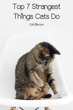 Cat Training Litter Box Cats frequently decide to not use the litterbox. These seven reasons come complete with how to correct the issue. Best Cat Litter, Litter Box, Kittens Playing, Cats And Kittens, Cat Peeing In House, Raising Kittens, Cats And Cucumbers, Cat Hacks, Cat Playground
