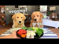 Tucker is not a big fan of veggies! Funny Animal Videos, Cute Funny Animals, Funny Dogs, Dog Test, Good Buddy, Police Dogs, Dog Eating, Pet Accessories, Dog Training