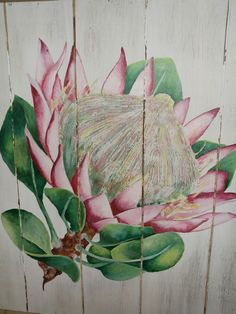 My painted protea Protea Art, Protea Flower, Acrilic Paintings, Flower Drawings, Image Transfers, King Art, Chalkboard Art, Pictures To Paint, Botanical Art