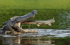 Perfect Timing - 10 Amazing Animal Photos