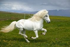 Since the age of five, horse riding has been one of my great passions and horses are one of my favourite animals; I wanted to share some of the most beautiful horses I have ever seen. Pretty Horses, Horse Love, Campolina, Especie Animal, Andalusian Horse, Friesian Horse, Arabian Horses, Horse Galloping, Appaloosa Horses